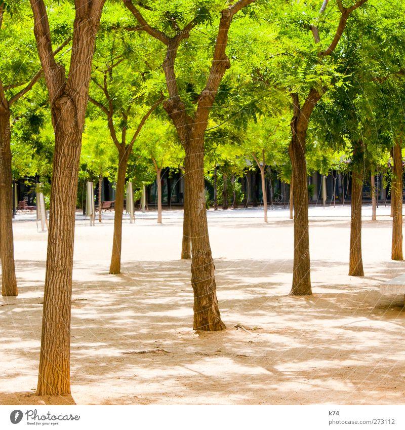 gang green Umwelt Natur Pflanze Sommer Schönes Wetter Baum Blatt Grünpflanze Garten Park Architektur leuchten Freundlichkeit Fröhlichkeit frisch saftig grün