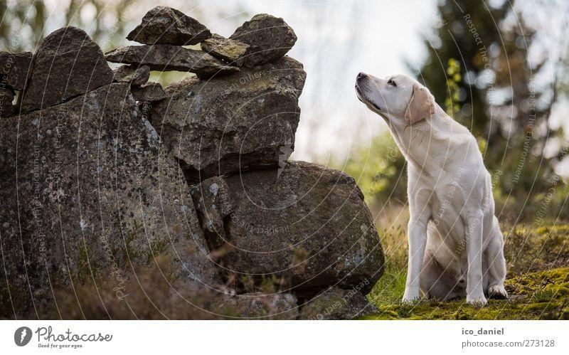 Schnüffeln die 2te Hund Natur weiß grün Freude Tier grau Stein Freundschaft Freizeit & Hobby frei Abenteuer Perspektive Hoffnung niedlich Neugier