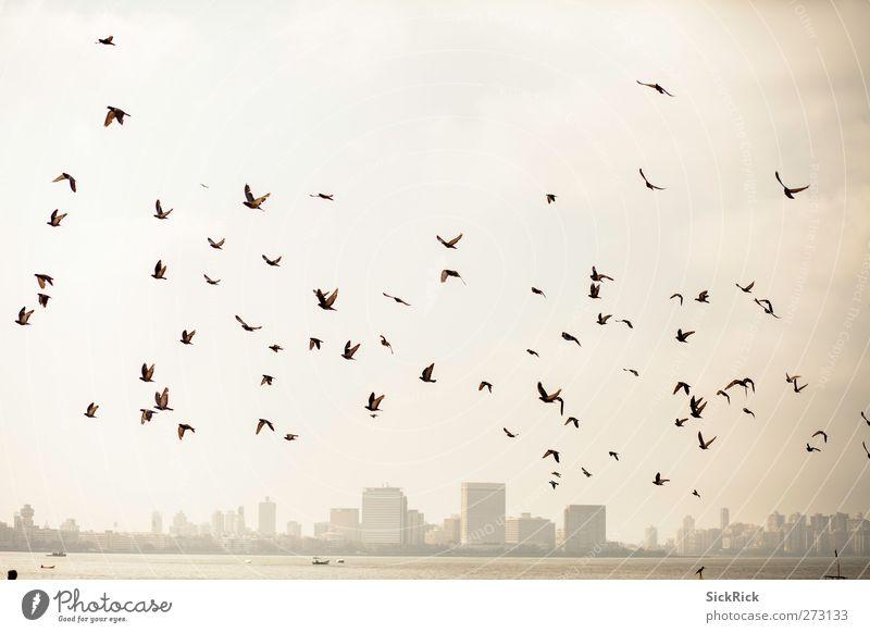 Bombay pigeons Indien Asien Stadt Hafenstadt Skyline Tier Vogel Flügel Schwarm alt Wärme braun gelb gold Stimmung Abenteuer Taube Kopf Farbfoto Gedeckte Farben