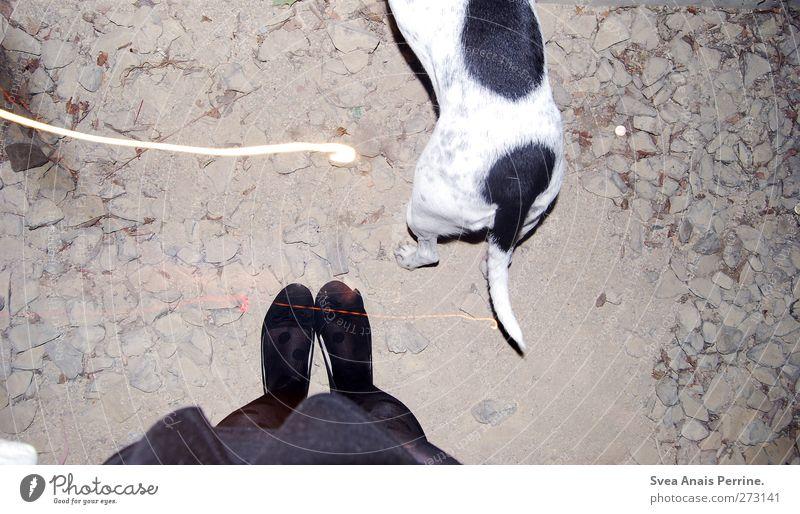 Lina and I Hund Mensch Jugendliche Tier Erwachsene feminin Beine Junge Frau Fuß Schuhe 18-30 Jahre stehen Asphalt dünn Rock Haustier