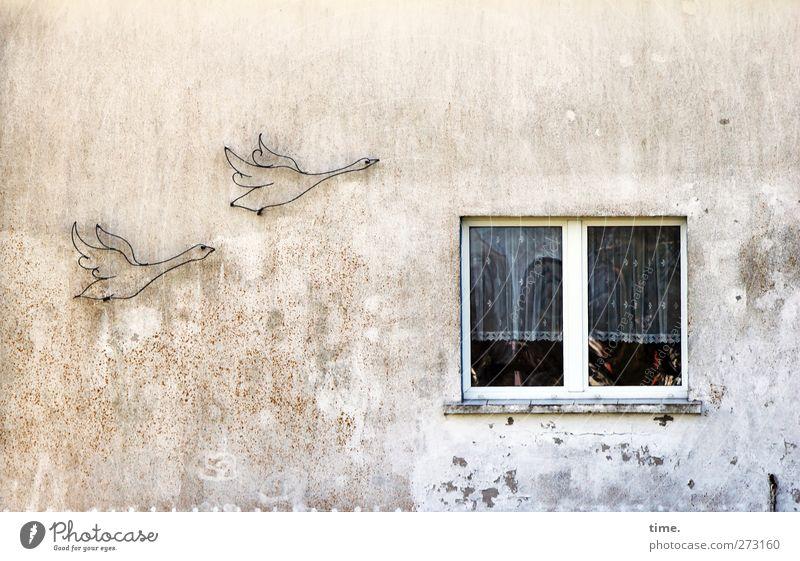 Hiddensee | Reisende soll man nicht aufhalten Kunst Kunstwerk Haus Bauwerk Gebäude Mauer Wand Fassade Fenster Gans 2 Tier fliegen Armut dreckig Enttäuschung