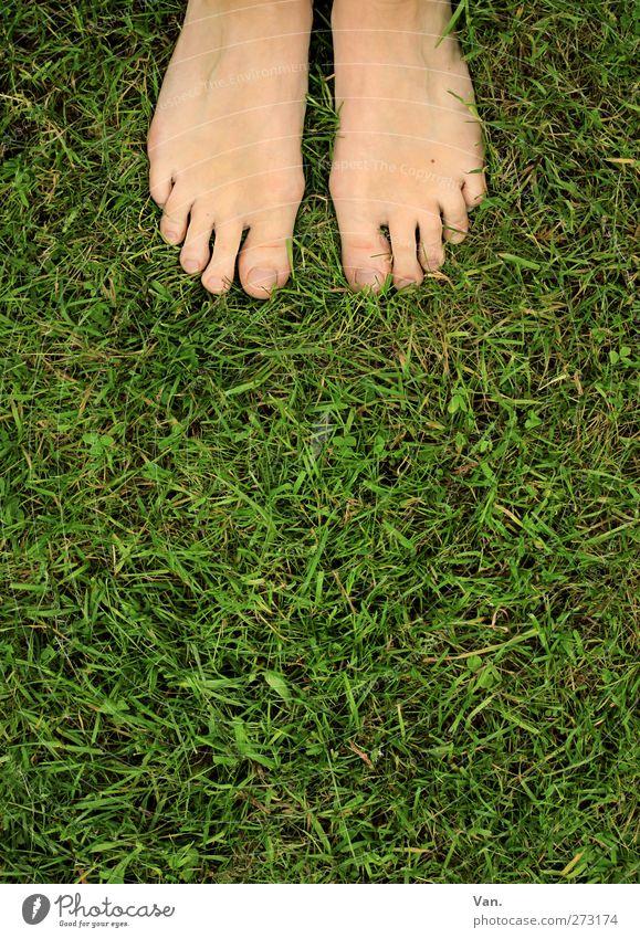 barfuß Mensch feminin Fuß Zehen 1 18-30 Jahre Jugendliche Erwachsene Natur Tier Frühling Pflanze Gras Wiese stehen frisch grün Barfuß Farbfoto mehrfarbig