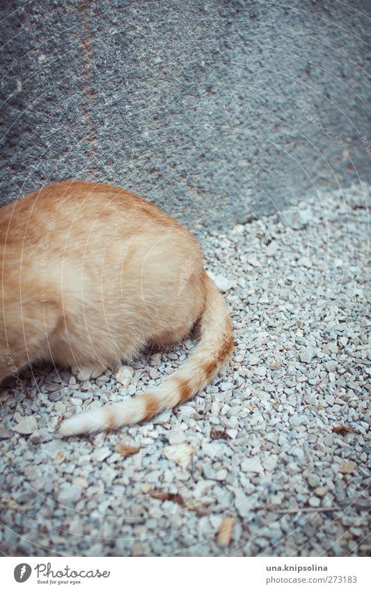 ze blond rothaarig Tier Haustier Katze Fell Schwanz 1 hocken liegen kuschlig natürlich weich beobachten Tigerfellmuster Kieselsteine Beton grau orange Farbfoto