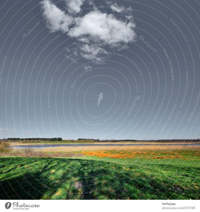 guten morgen Freizeit & Hobby Umwelt Natur Landschaft Pflanze Tier Erde Luft Wasser Himmel Wolken Horizont Frühling Sommer Klima Schönes Wetter Wiese Feld Wald