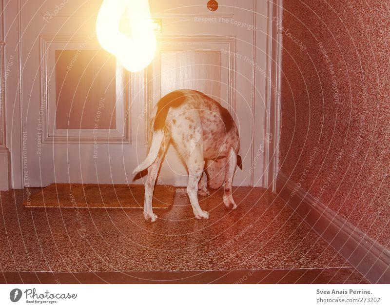 <3 <3 <3 Treppenhaus Haustier Eingangstür Fußmatte Tier Hund 1 stehen trashig Nacht Licht Lichtspiel Lichterscheinung Langzeitbelichtung Boxer gepunktet Geruch