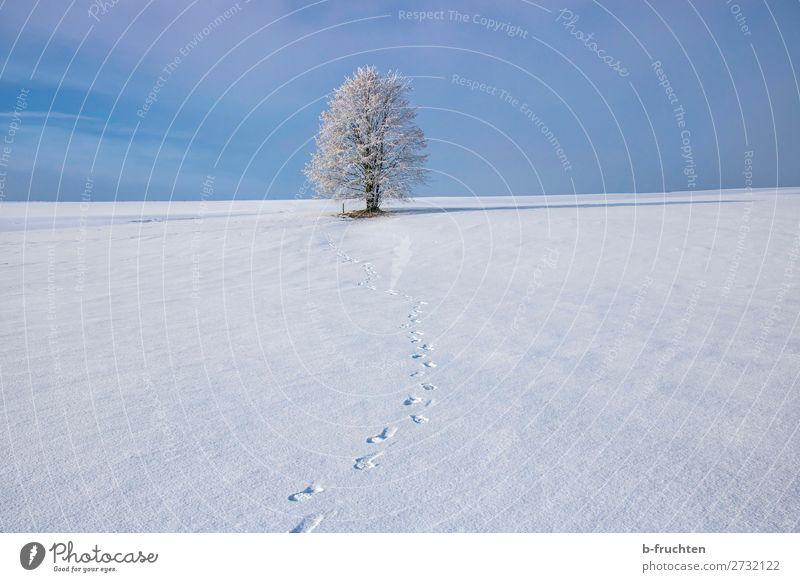 Baum im Winter, Schnee, Frost Wohlgefühl Erholung ruhig Schönes Wetter Eis frieren frei frisch blau Freude Zufriedenheit Lebensfreude Freiheit Freizeit & Hobby