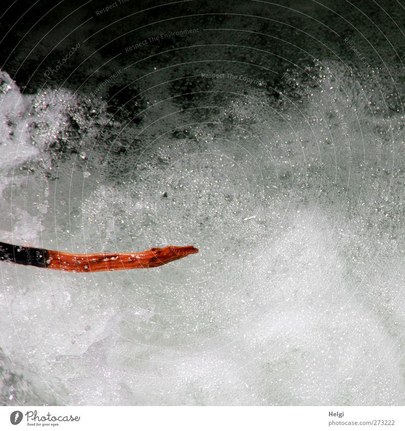 Tatzelwurm... Natur Wasser weiß rot Umwelt kalt Berge u. Gebirge Bewegung Frühling grau außergewöhnlich glänzend natürlich nass Geschwindigkeit frisch
