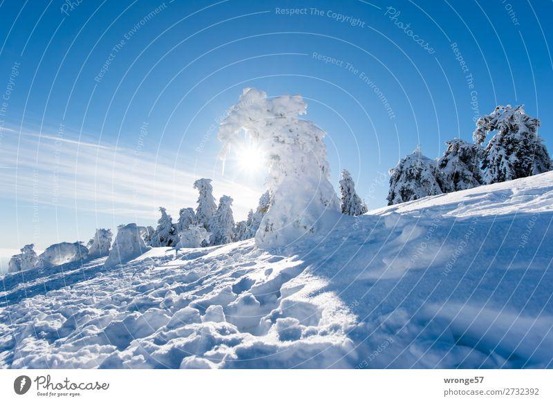 Winterwald II Natur Landschaft Pflanze Himmel Schönes Wetter Eis Frost Schnee Baum Nadelbaum Fichtenwald Berge u. Gebirge Harz Brocken blau braun weiß Wald
