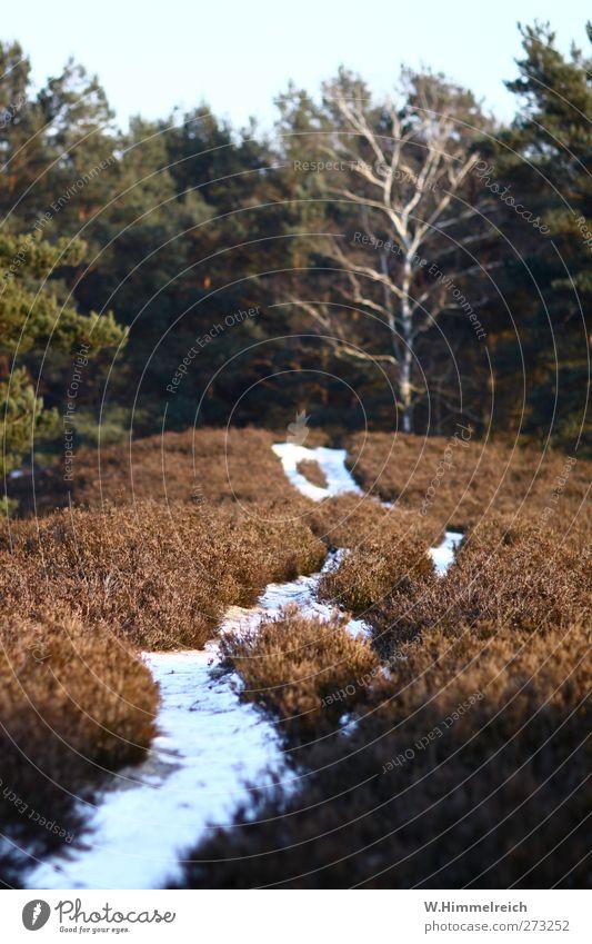Schneewegchen Natur weiß grün Winter ruhig Wald Erholung Umwelt Ferne Landschaft Schnee Freiheit Park braun Eis Zufriedenheit