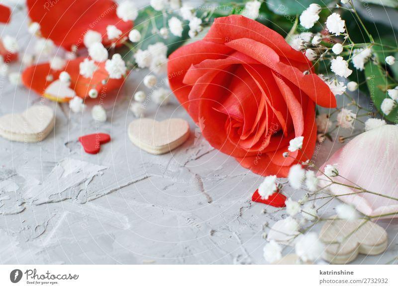 Rote Rosen Blumen, Blütenblätter und Herzen schön Dekoration & Verzierung Feste & Feiern Hochzeit Mutter Erwachsene Liebe hell grau grün rosa rot Hintergrund