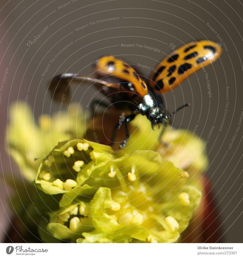 Frühlingsstart Natur grün Pflanze Tier Wald Bewegung orange Wildtier fliegen glänzend natürlich Wachstum Beginn leuchten Flügel Blühend