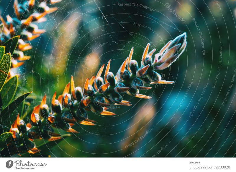 Nahaufnahme einer in ein Spinnennetz eingewickelten Stachelpflanze Pflanze Vegetation Flora Wald Stacheln Blätter Botanik botanisch Garten Park natürlich Natur