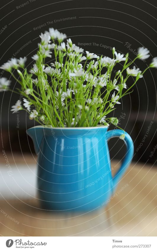 weiße Frühlingsblumen in blauem Keramikkrug Blume Wildpflanze Duft frisch braun grün schwarz Krug Behälter u. Gefäße Steingut Kännchen Kannenpflanzen zart