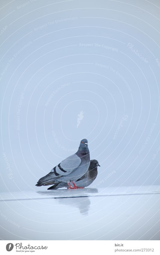 Der Traum vom Fliegen - UT S/HD 2012 Himmel blau Tier ruhig Erholung Umwelt Luft Vogel Zusammensein Klima sitzen Tierpaar glänzend stehen schlafen Flügel