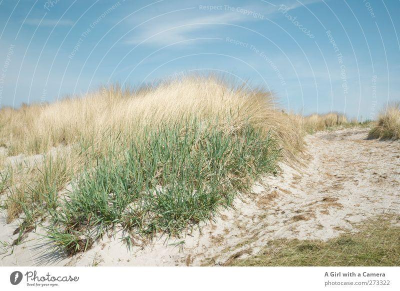 Hiddensee l die Dünen im Süden Natur blau grün schön Pflanze Sommer Umwelt Landschaft gelb Wärme Gras Küste Sand Luft hell Wetter