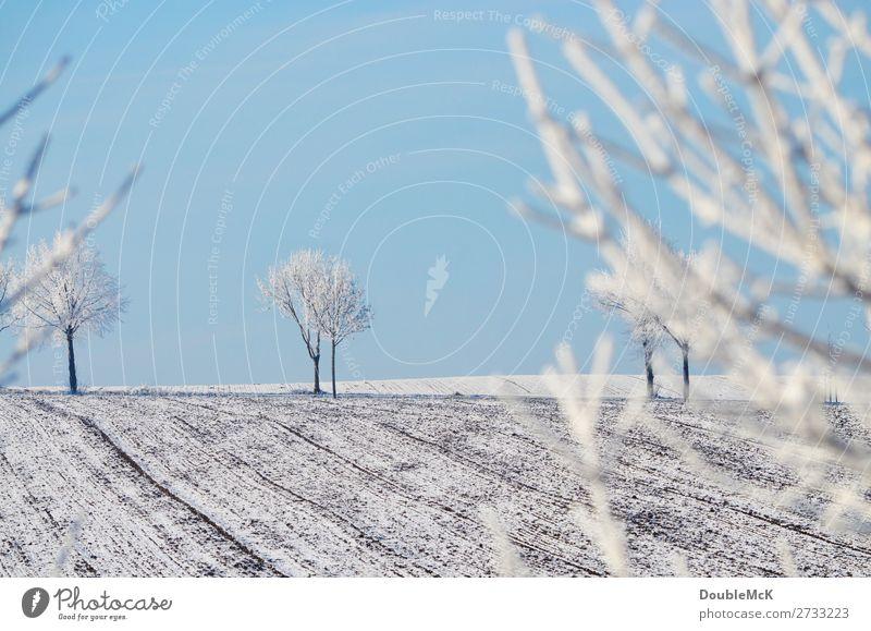 Schneebedeckte Bäume auf einem Feld Natur Landschaft Himmel Wolkenloser Himmel Winter Schönes Wetter Baum frei frisch hell kalt natürlich schön blau weiß