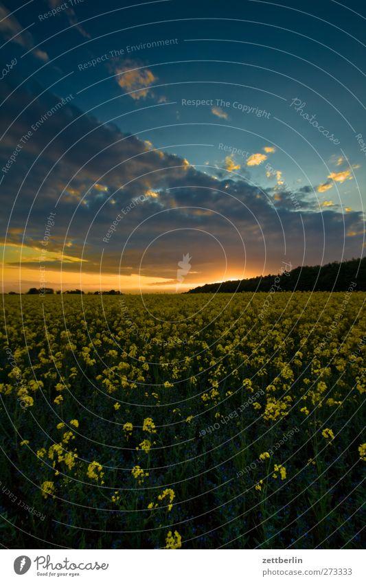 Middelhagen Ferne Sommer Sonne Landwirtschaft Forstwirtschaft Umwelt Natur Landschaft Pflanze Himmel Wolken Sonnenaufgang Sonnenuntergang Klima Klimawandel