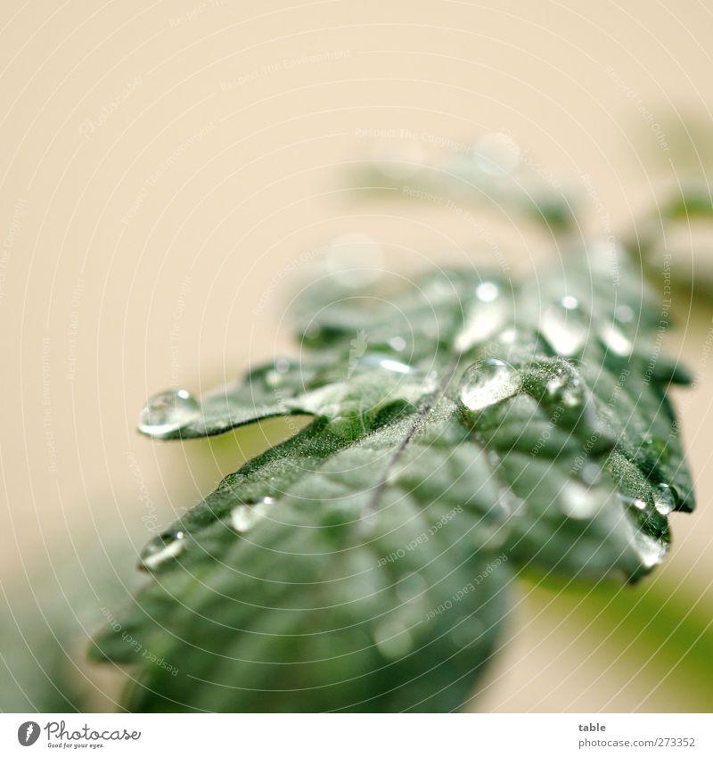 Tropfenmakro... Natur Wasser grün Pflanze Sommer Blatt ruhig Umwelt Frühling glänzend nass Wachstum frisch leuchten Wassertropfen Urelemente