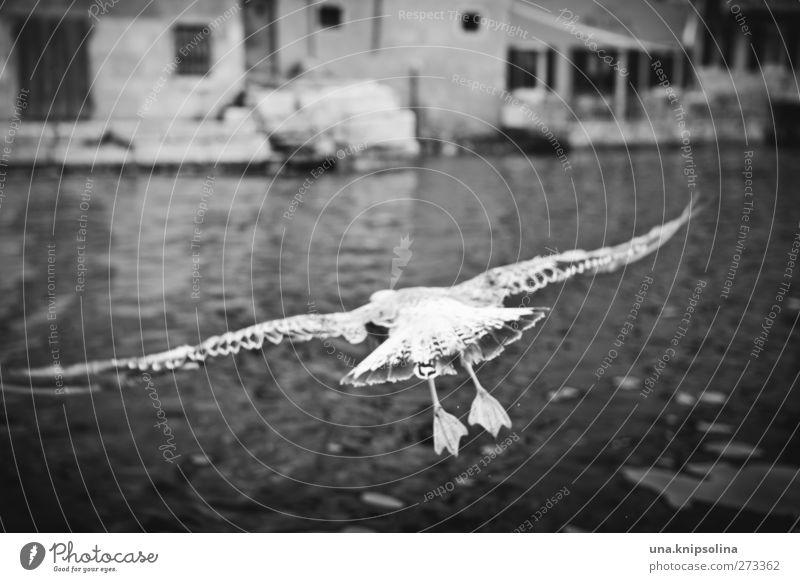 meins meins meins Wasser Wellen Meer Stadt Hafen Tier Wildtier Vogel Flügel Möwe Feder 1 fliegen Außenaufnahme Menschenleer Tag Schwache Tiefenschärfe