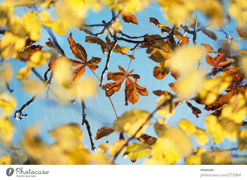 Durchblick Natur Himmel Herbst Baum Blatt herbstlich Herbstfärbung Herbstwetter Kastanienblatt natürlich Farbfoto Außenaufnahme Menschenleer Kontrast
