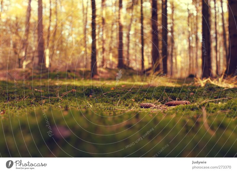 Am Waldboden Natur alt grün Baum Pflanze Sommer Farbe ruhig Wald Umwelt Herbst natürlich Wachstum Bodenbelag Warmherzigkeit Wandel & Veränderung
