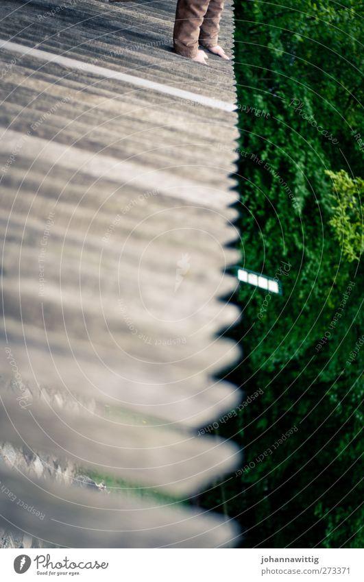 halt dich fest! Mensch Hand grün Baum Pflanze Herbst Garten Park Linie braun Kraft Arme Schönes Wetter festhalten diagonal eng