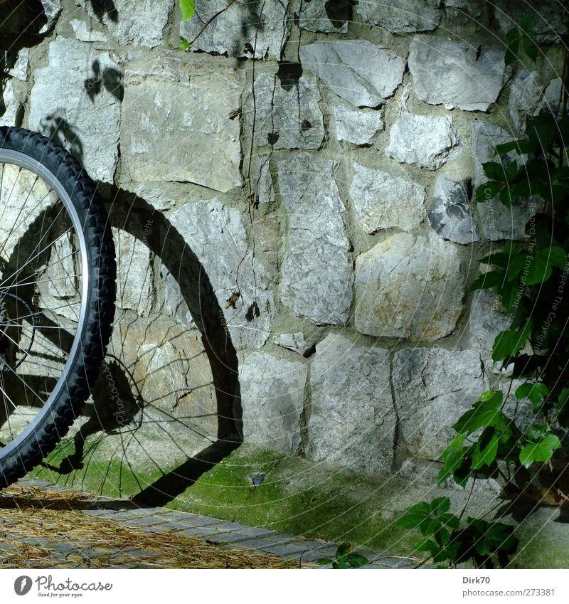Rasten vom Radeln sportlich Fitness Freizeit & Hobby Fahrradtour Fahrradfahren Mountainbike Mountainbiking Pflanze Efeu Grünpflanze Wildpflanze Wein Mauer Wand
