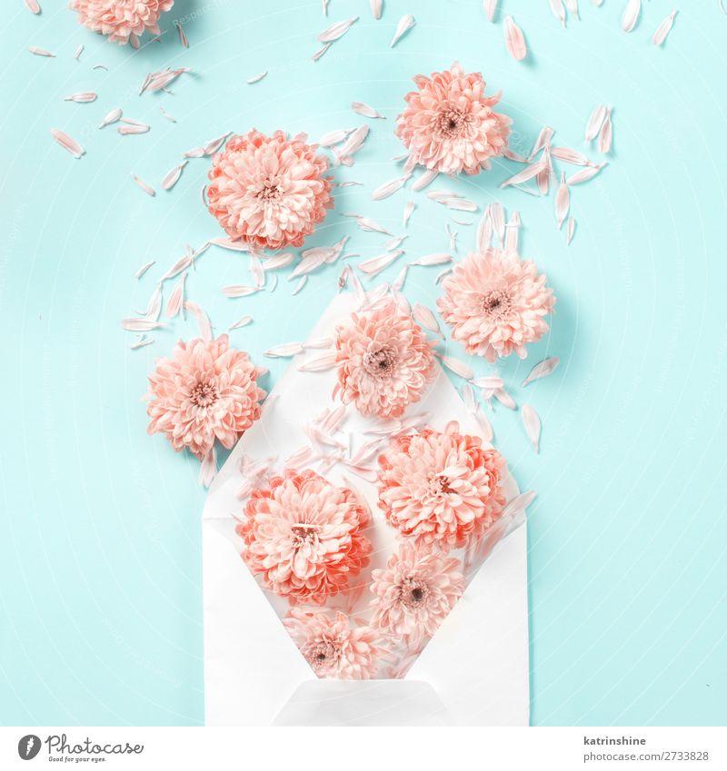 Umschlag mit Blumen Design Dekoration & Verzierung Hochzeit Frau Erwachsene Mutter Kunst Herz oben rosa Kreativität Hintergrund Postkarte Zusammensetzung