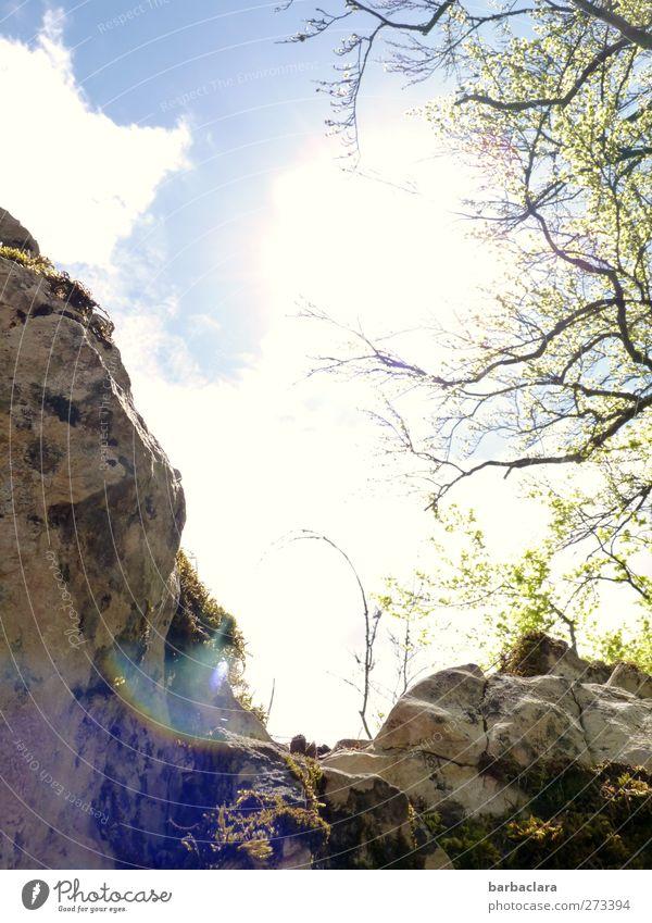 In luftiger Höhe Landschaft Luft Himmel Sonne Baum Sträucher Felsen Berge u. Gebirge Schwäbische Alb genießen wandern frei hell oben wild Freude Begeisterung