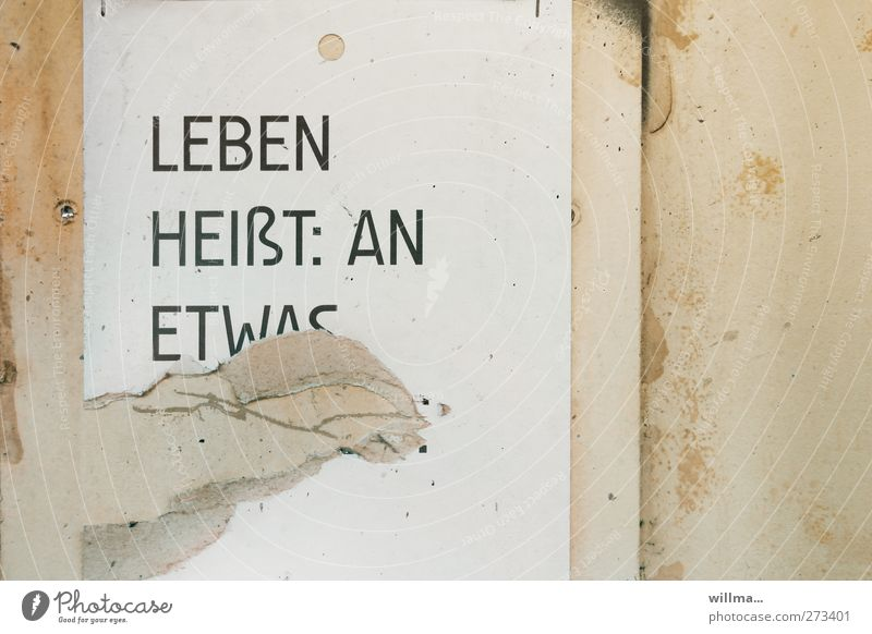 leben Stadt weiß Wand Leben Mauer Religion & Glaube Schriftzeichen Zukunft kaputt Hoffnung Ziel Glaube Information Text beige Plakat