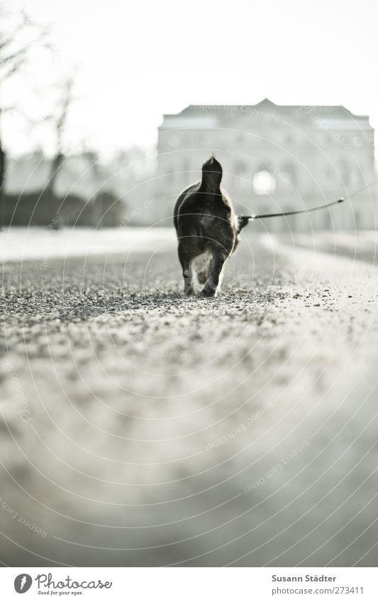 gute Reise. bester Freund. Tier Haustier Hund Fährte 1 laufen alt authentisch Ferne Einsamkeit Wege & Pfade gehen Hundeleine Spaziergang Park klein Abschied