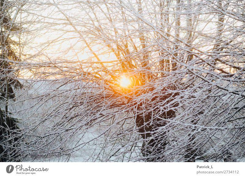 Im Winter Natur Schönes Wetter Schnee Schneefall Baum Wald frieren hängen liegen schön gelb gold weiß Zufriedenheit Vorfreude Kraft ruhig Abenteuer entdecken