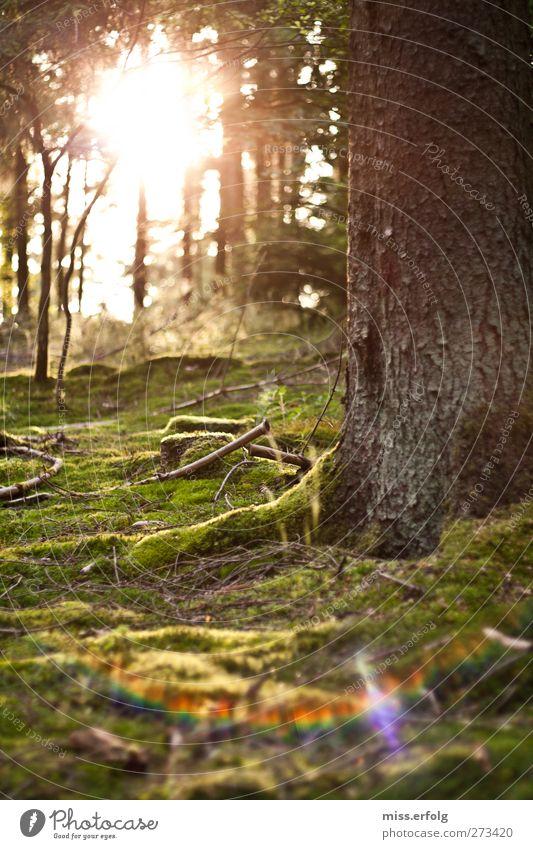geWALDig Natur grün Baum Sonne Umwelt gelb Leben Freiheit hell braun Erde rosa wild Abenteuer Sträucher genießen