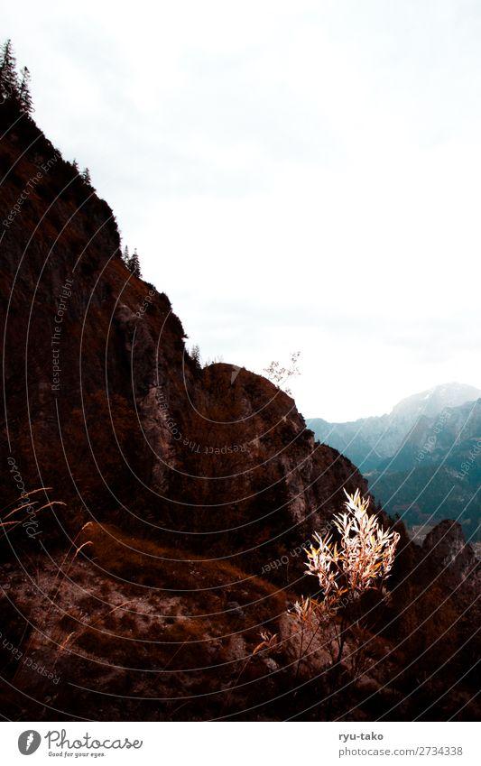 Weg nach oben Natur Landschaft Pflanze Herbst Gras Sträucher Hügel Felsen Berge u. Gebirge frei trocken Zufriedenheit Gelassenheit ruhig herausstechend weiß