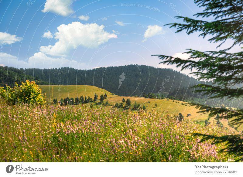 Sommerliche Natur mit bewaldeten Bergen und blühenden Ebenen Freude Ferien & Urlaub & Reisen Berge u. Gebirge Umwelt Landschaft Wetter Schönes Wetter Wärme