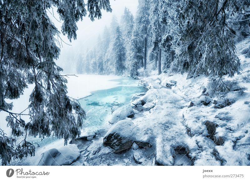 Die Geister am Mummelsee Natur Wasser Winter Wetter Nebel Eis Frost Schnee Wald Seeufer kalt blau schwarz weiß Idylle Farbfoto Außenaufnahme Menschenleer Tag
