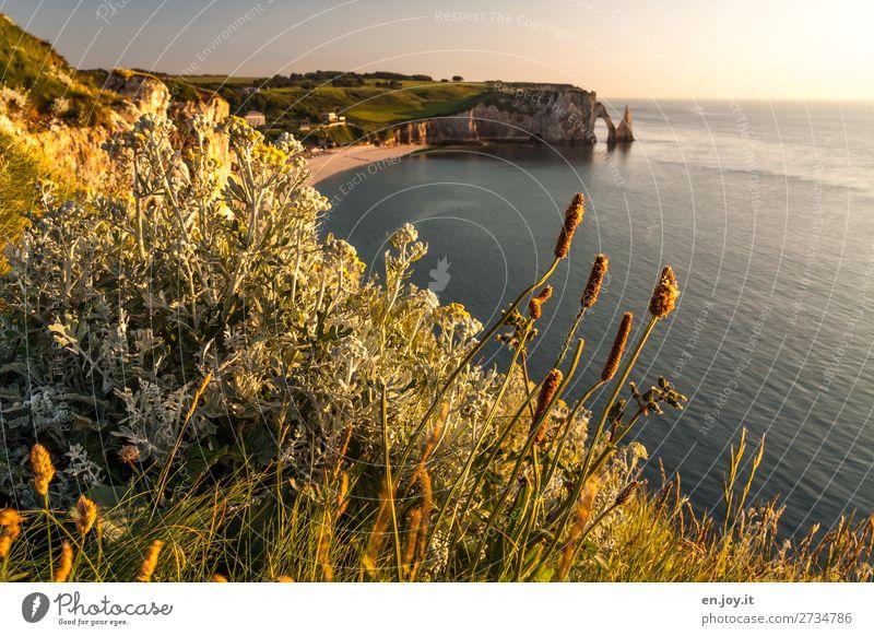 Unkraut über Étretat Ferien & Urlaub & Reisen Ausflug Ferne Sommer Sommerurlaub Sonne Strand Meer Natur Landschaft Himmel Horizont Sonnenaufgang Sonnenuntergang