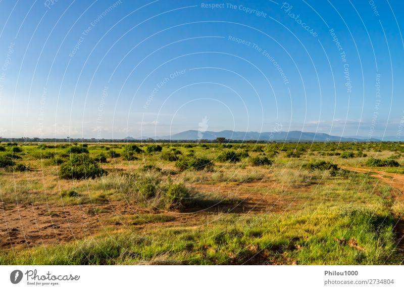 Blick auf die Pfade und Savannen des Samburu Parks Spielen Ferien & Urlaub & Reisen Safari Sommer Umwelt Natur Landschaft Himmel Baum Gras blau grün Afrika