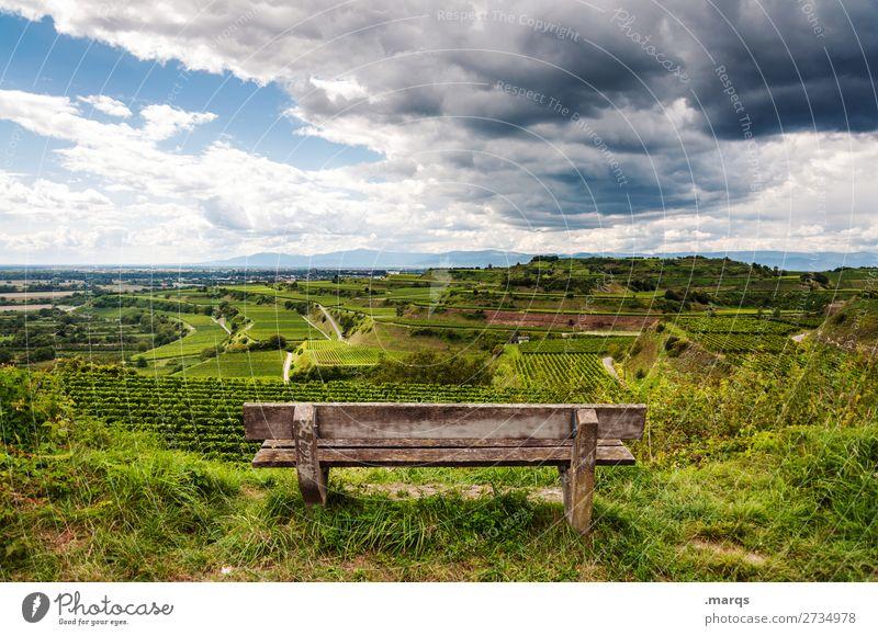Kaiserstuhl Landschaft Sommer Schönes Wetter Wein Hügel Terassenfeld Bank Erholung Stimmung Natur Aussicht Pause Farbfoto Außenaufnahme Menschenleer