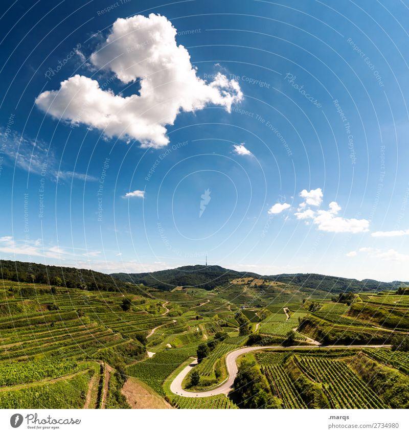 Kaiserstuhl Landschaft nur Himmel Sommer Schönes Wetter Weinberg Feld Hügel Straße Erholung Natur Aussicht Farbfoto Außenaufnahme Menschenleer