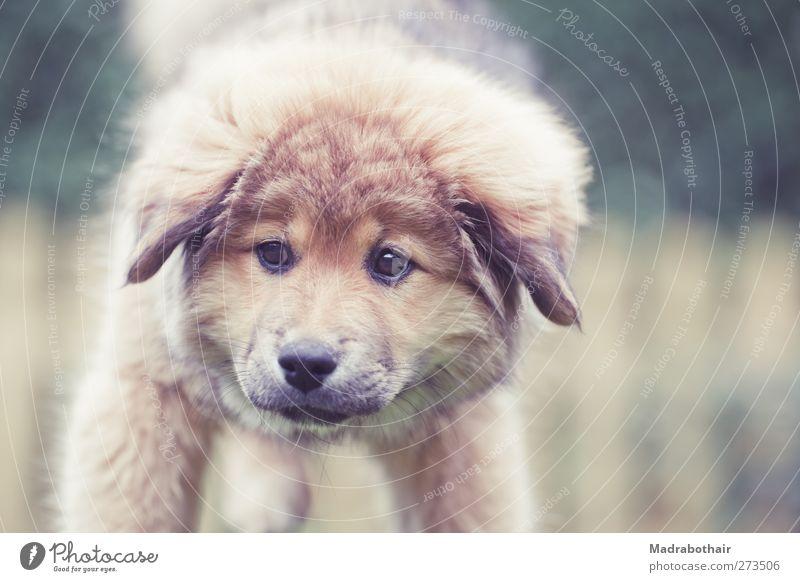 Elo Welpe Haustier Hund Tiergesicht 1 Tierjunges stehen kuschlig klein niedlich retro Garten Zaun Blick Auge Farbfoto Gedeckte Farben Außenaufnahme Menschenleer