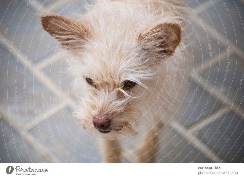 Hund schön Freundschaft Freundlichkeit Haustier lieblich
