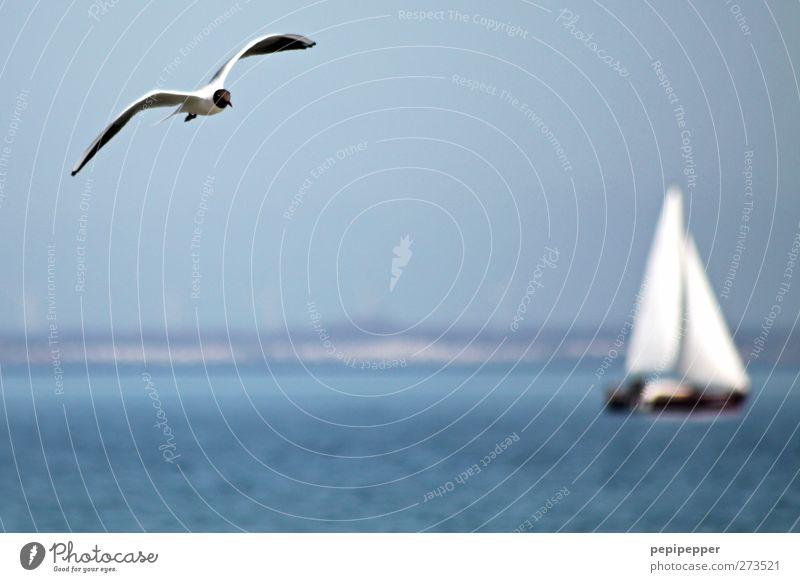 __v_______________ ( I ) ___ Freizeit & Hobby Ferien & Urlaub & Reisen Ausflug Freiheit Sommer Meer Segeln Wasser Himmel Wolkenloser Himmel Schönes Wetter Küste
