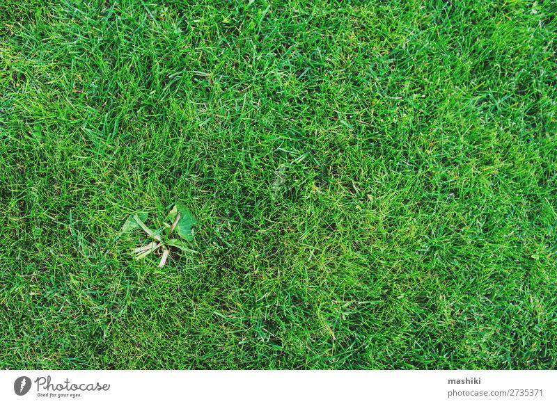 Gras auf dem Rasen. Unkrautbeseitigung aus dem Gartenkonzept Sommer Arbeit & Erwerbstätigkeit Gartenarbeit Umwelt Natur Pflanze Erde Park Wachstum natürlich