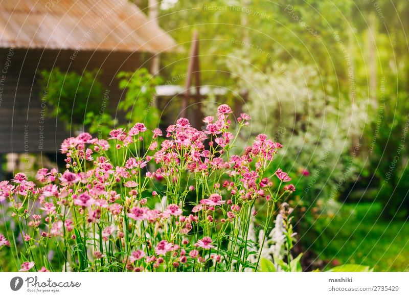 privates Ferienhaus Gartenblick Design schön Erholung Freizeit & Hobby Sommer Dekoration & Verzierung Gartenarbeit Natur Landschaft Pflanze Baum Blume Gras