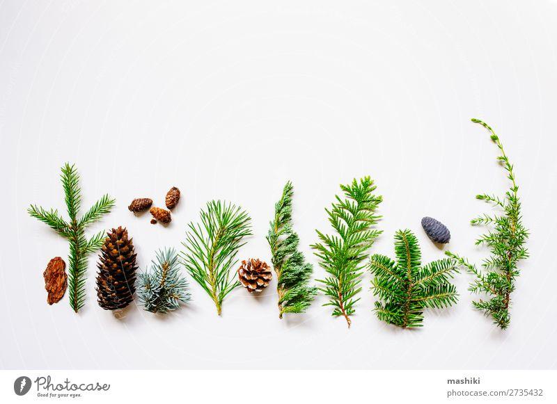 Natur Pflanze grün weiß Baum Blatt natürlich Garten außergewöhnlich oben Design Dekoration & Verzierung Kreativität Sammlung Tanne Botanik