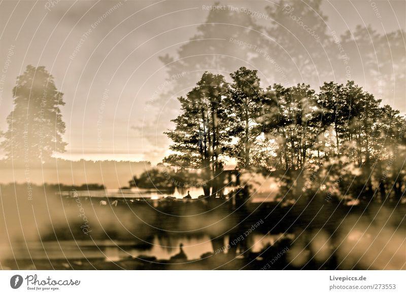 2,0 Promille Umwelt Natur Landschaft Wasser Himmel Sonnenaufgang Sonnenuntergang Sonnenlicht Sommer Schönes Wetter Pflanze Baum Sträucher Küste Seeufer Strand