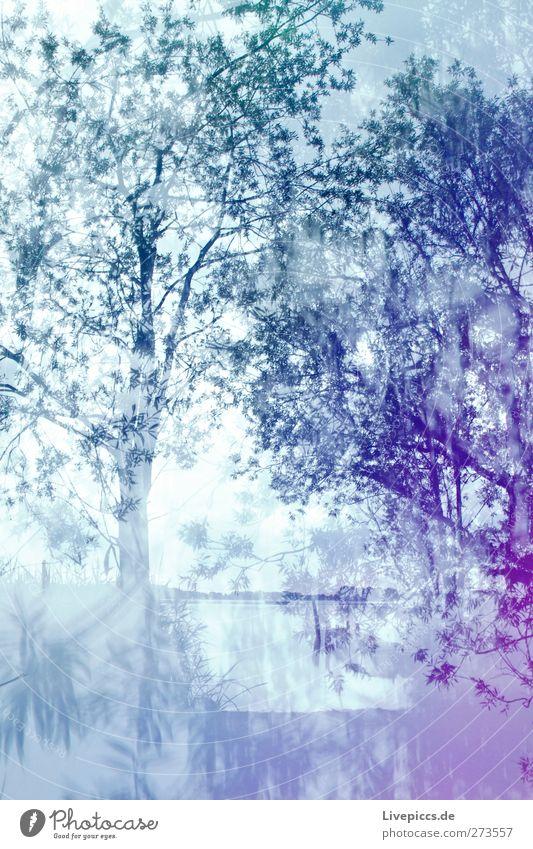 2,1 Promille Himmel Natur blau Wasser grün Baum Pflanze Sommer Strand Blatt Wolken Umwelt Landschaft Küste See Wetter
