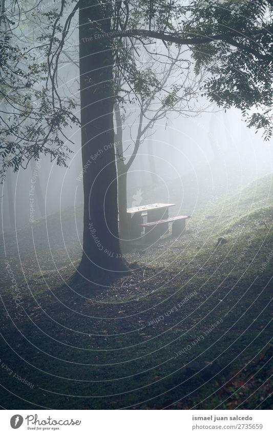 Bäume und Nebel im Wald Baum Farbe grün Berge u. Gebirge Natur Landschaft Außenaufnahme Ferien & Urlaub & Reisen Platz Ausflugsziel Herbst fallen Hintergrund