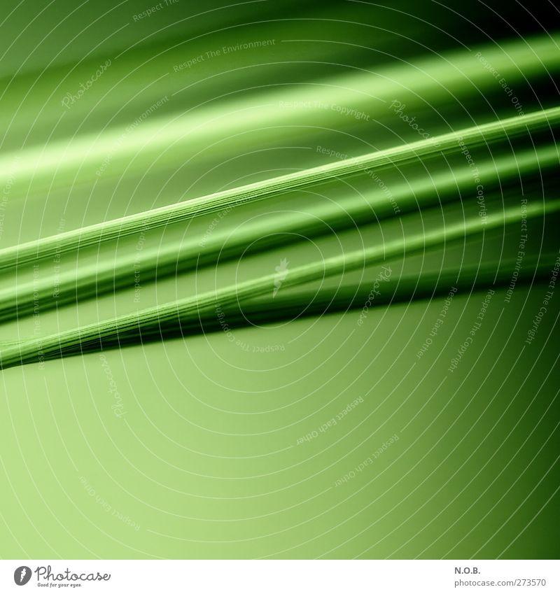 Stengelstreifen Natur grün Pflanze Umwelt Frühling Gras Linie elegant ästhetisch Kreativität parallel